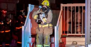 消防士に助け出される猫