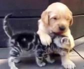 出会ったばかりの子犬と子猫。初めてとは思えないほど、仲良くじゃれ合う姿が可愛すぎる (〃∇〃)♡