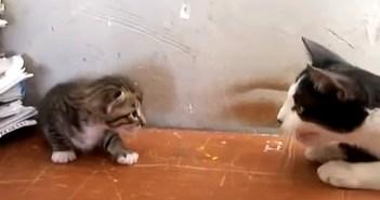 お話をする子猫と母猫