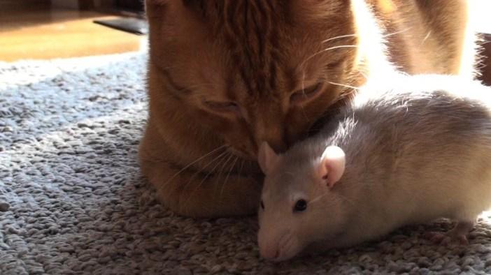 仲良しな猫とネズミ
