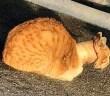 テープロールに首がはまった猫