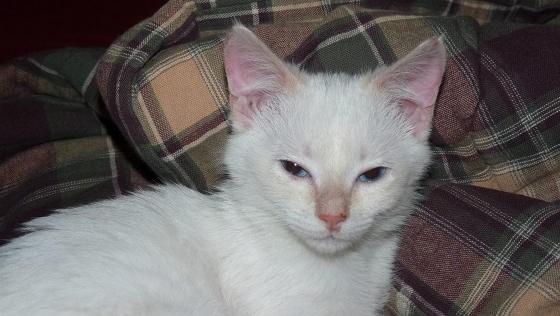 いい表情の子猫