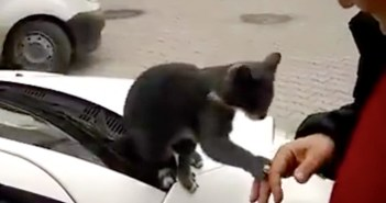 街で近づいて来た猫