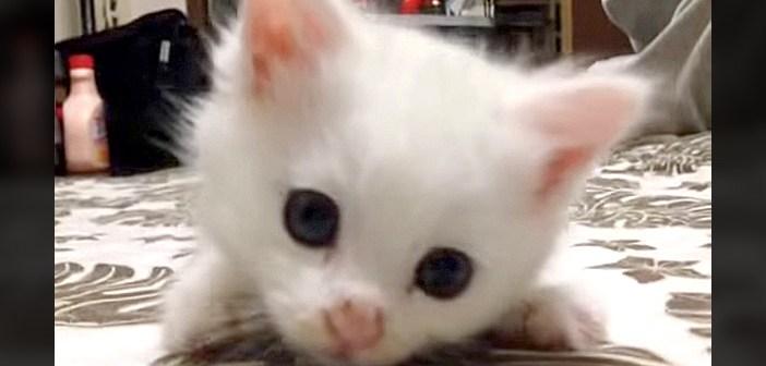 家に来たばかりの子猫