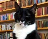 ある日、古本屋に入って来た野良猫。いつの間にか店長になって、みんなの人気者に ( *´艸`) 10枚