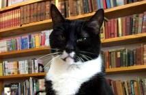 本屋さんの猫
