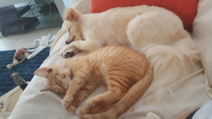 幸せそうな子猫と犬