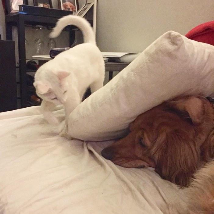 猫と隠れる犬