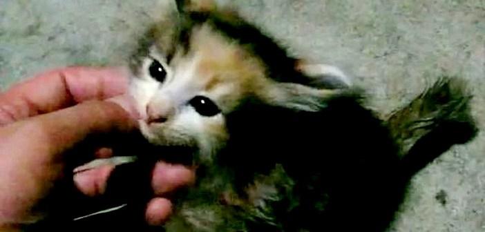 子猫の保護