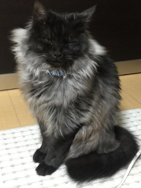 フサフサの猫