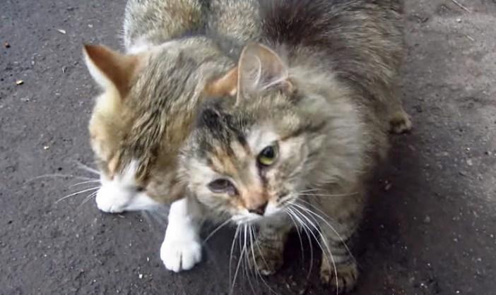 すり寄る2匹の猫