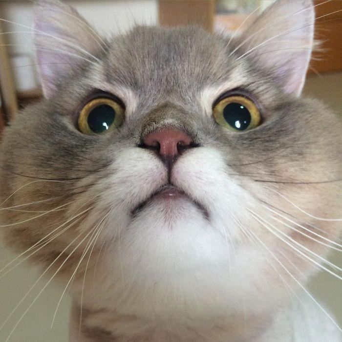ムンとする猫