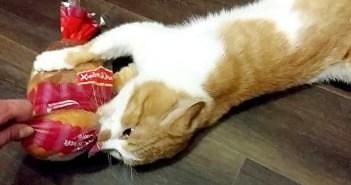 パンを離さない猫