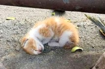路上の子猫