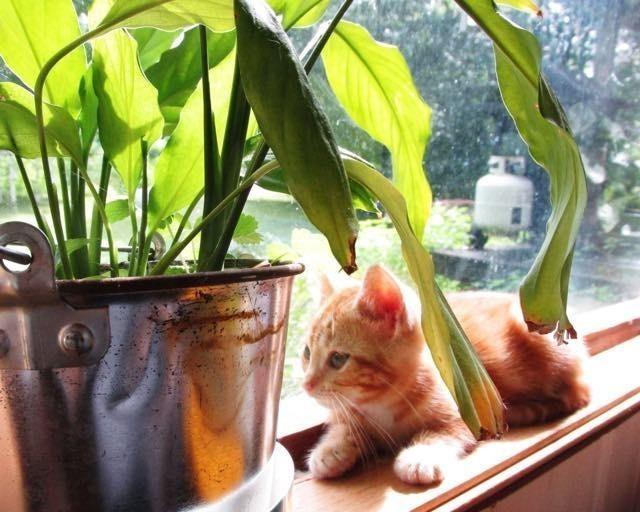日向ぼっこ子猫