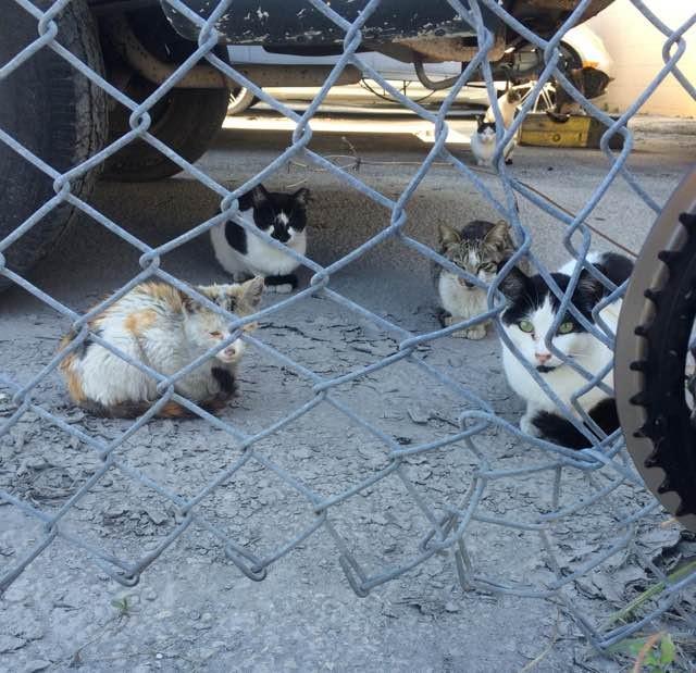 廃品置き場の猫