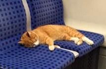 地下鉄に乗る猫
