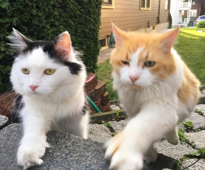 同じ動きの猫