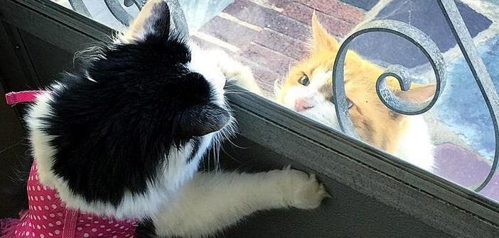 ドア越しの猫