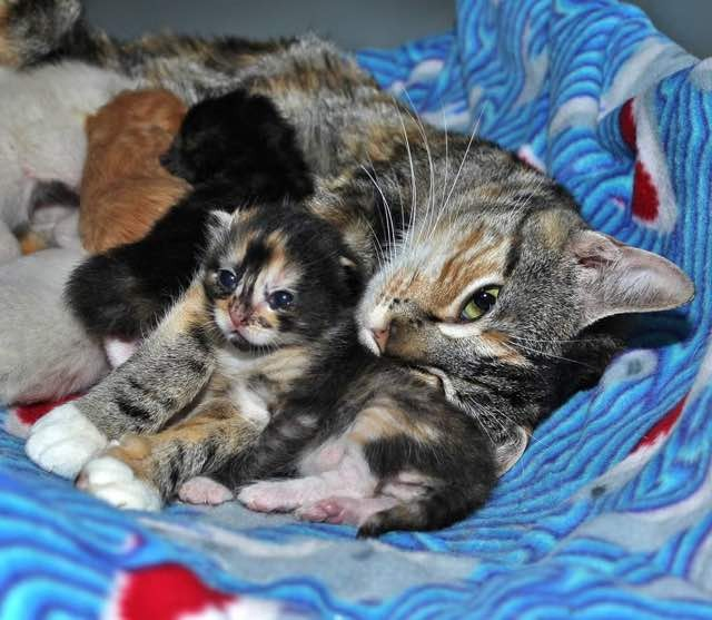 子猫達を抱く母猫