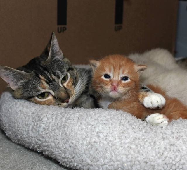 子猫を捕まえた母猫