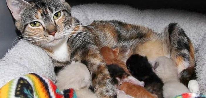 子猫が大好きな母猫