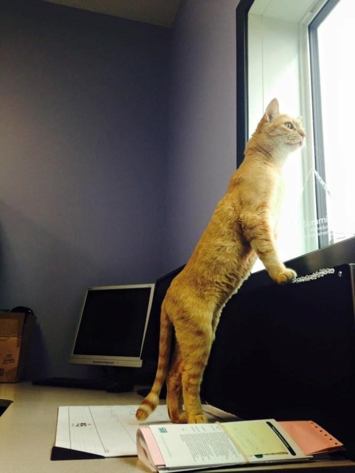 外を見つめる猫