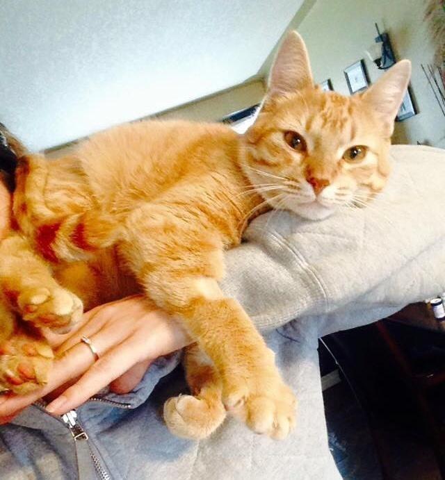 手を抱く猫