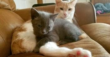 子猫と父猫