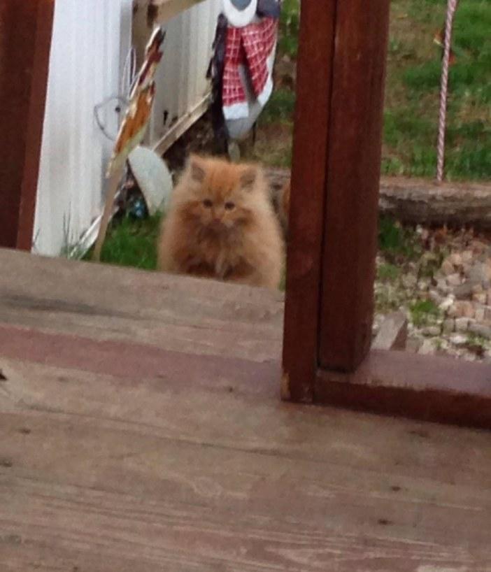 覗き込む子猫
