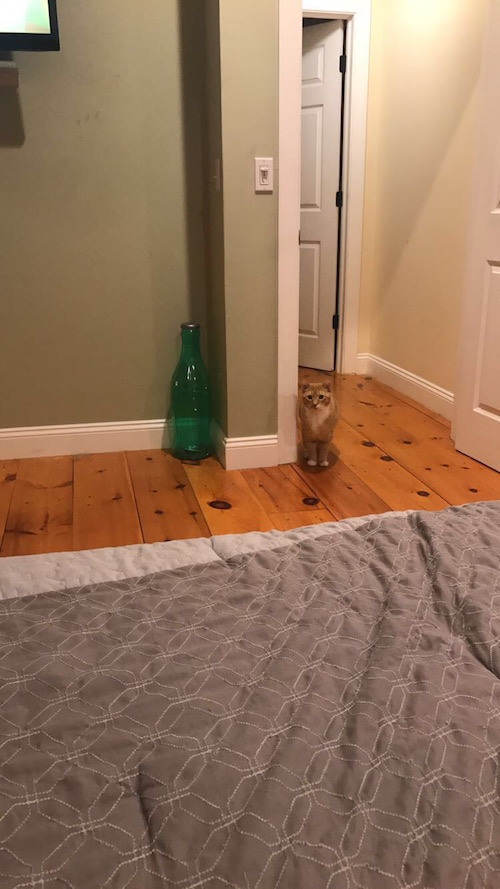 見てくる猫