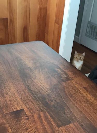 テーブルの向こうの猫