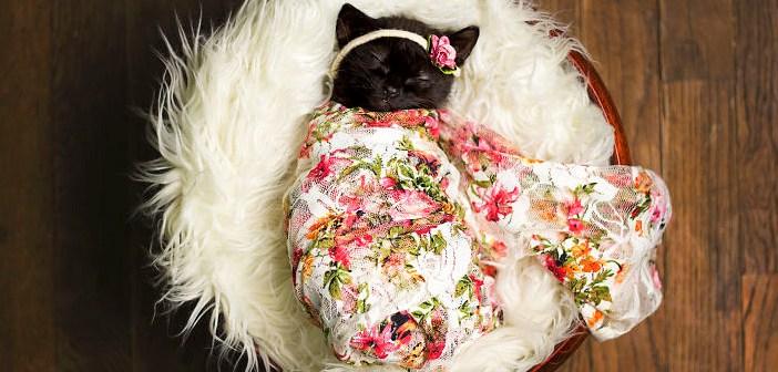 赤ちゃん子猫