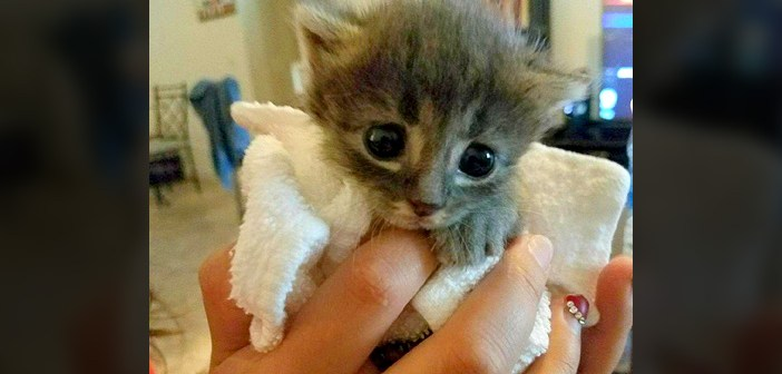 保護された子猫