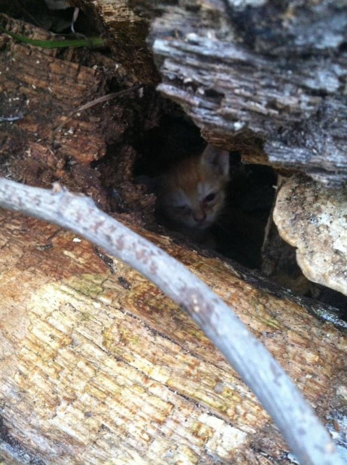 木の隙間の子猫