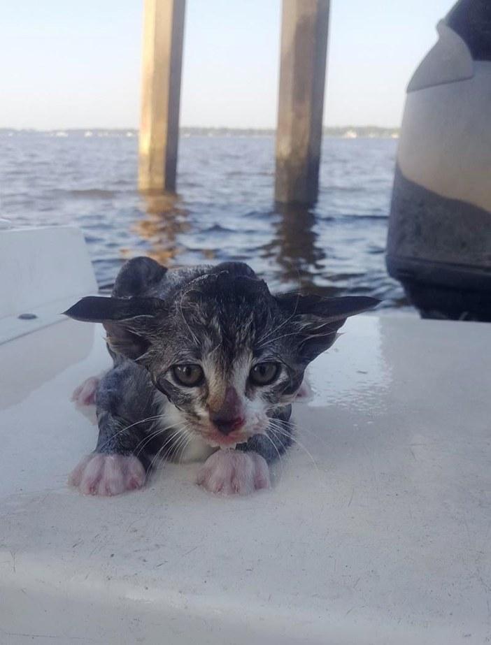 水に落ちた猫