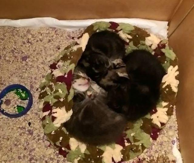 保護された3匹の子猫