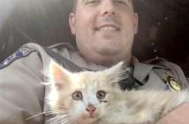 ゴールデンゲートブリッジから助け出された子猫