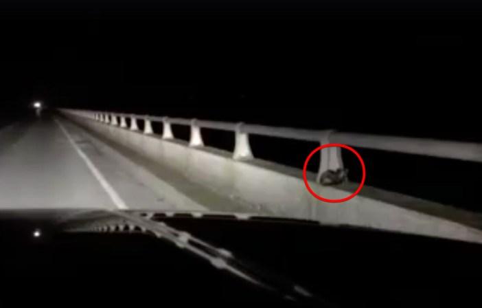 橋にいる子猫