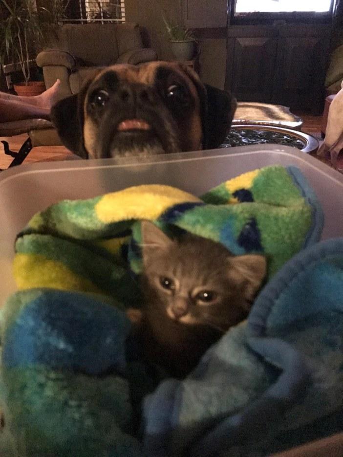 犬に見られる子猫