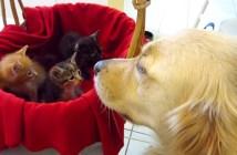 子猫を見つめる大きな犬