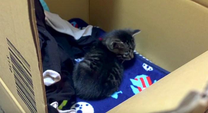 ダンボール箱に入れられた子猫