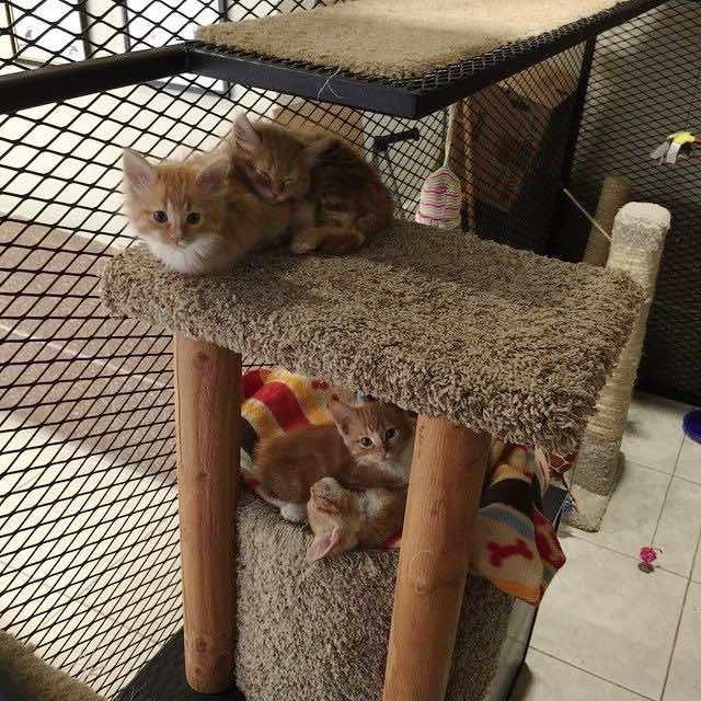 固まる2匹の子猫