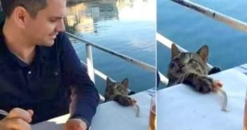 魚を捕る猫