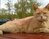 20年間、小さな町を愛し続けた『猫町長』。天国へ旅立った後も、みんなの心を温め続ける (8枚)