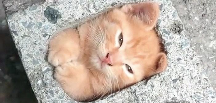 ブロックに入る子猫