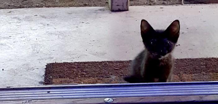 家を訪ねてきた子猫