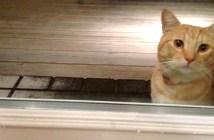 家を訪ねて来た猫