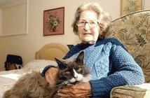 おばあちゃんと猫