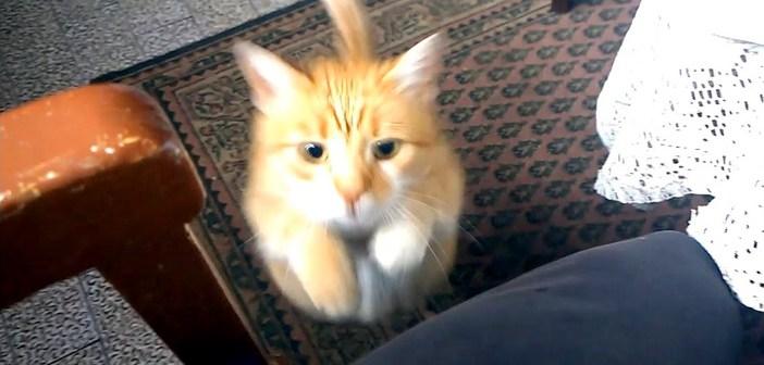 飛び乗ってくる猫